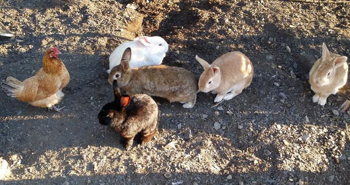 La tenuta: animali tolleranti
