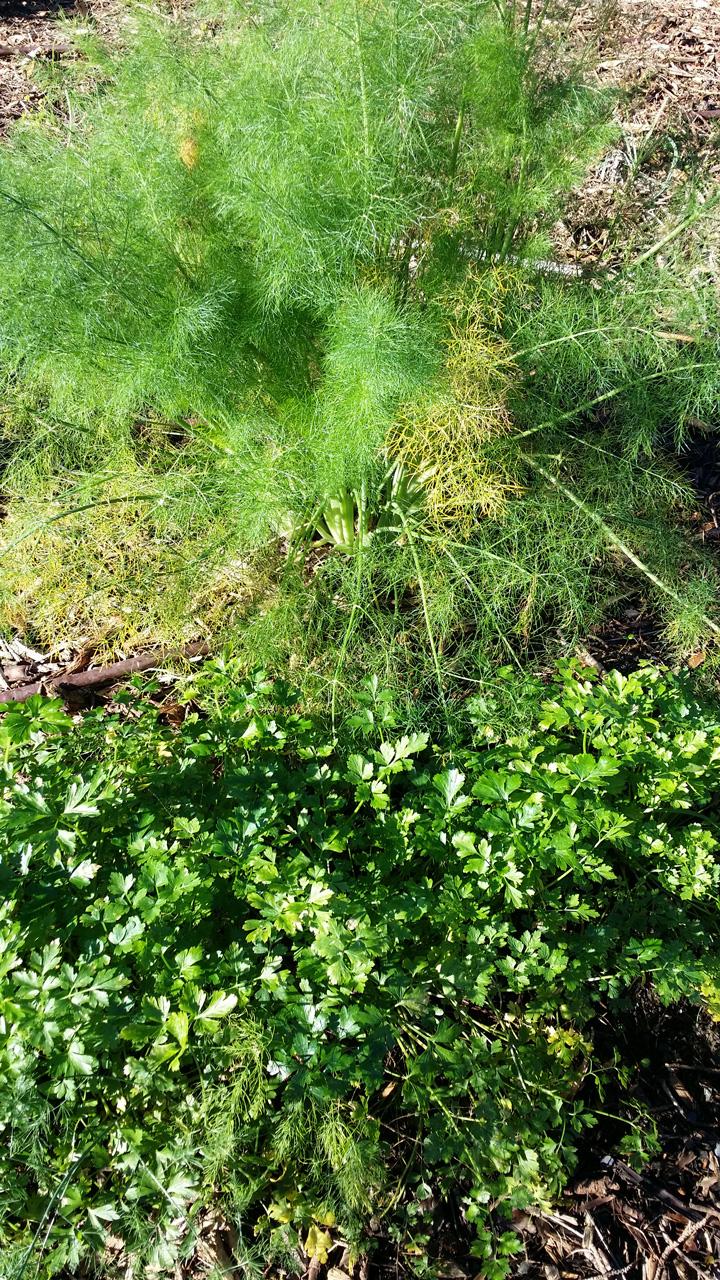La tenuta: erbe aromatiche