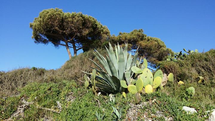 Il paesaggio: cacti, pini e cielo blu