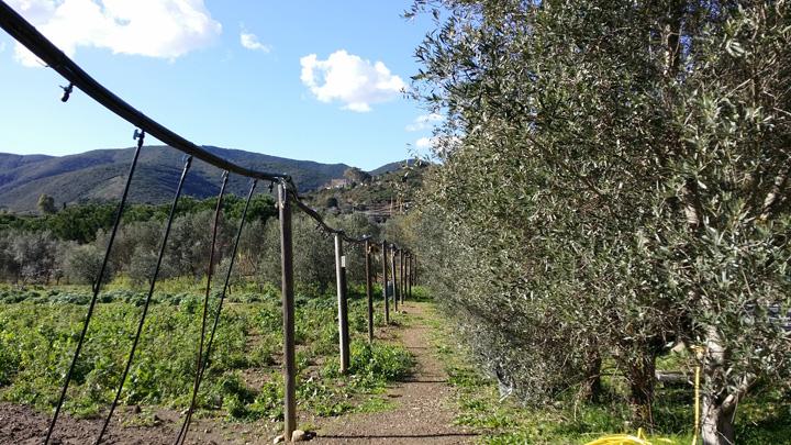 La tenuta: coltivazione bio