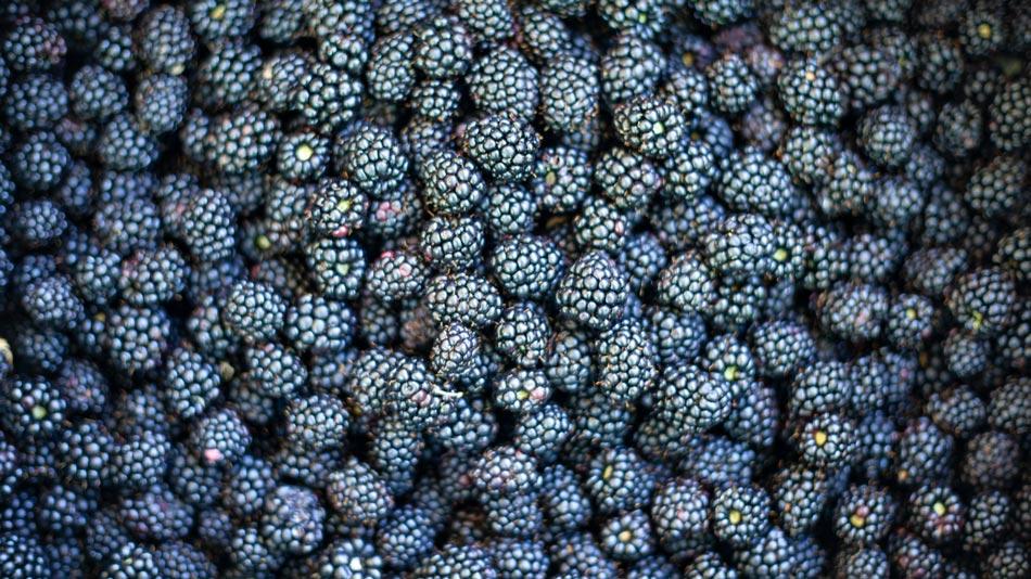 Fruit, groenten, jam, brood en koekjes, wijn; de vrucht van ons werk. Camping Orti di Mare, Lacona - Eiland Elba, Italië