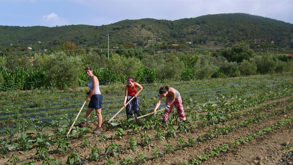 The organic Farm. Camping Orti di Mare, Elba Island, Italy