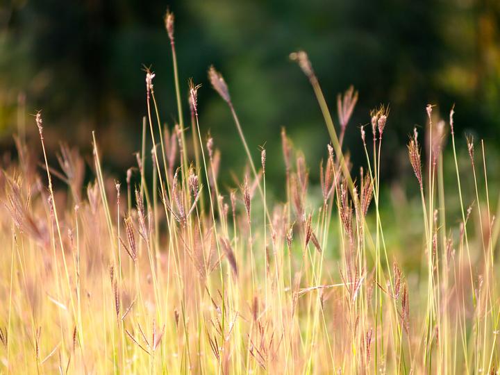 Sosta camper: nella natura
