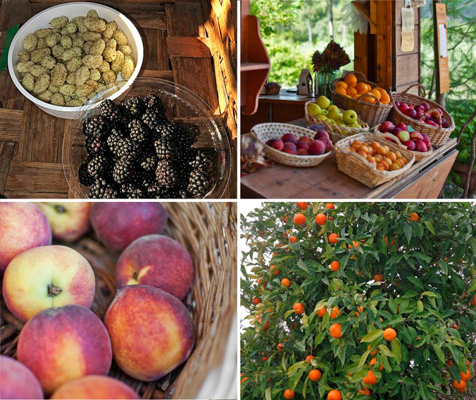 Fruits, vegetables, jams, bread and biscuits, wine; the fruit of our work. Camping Orti di Mare, Lacona - Elba Island, Italy