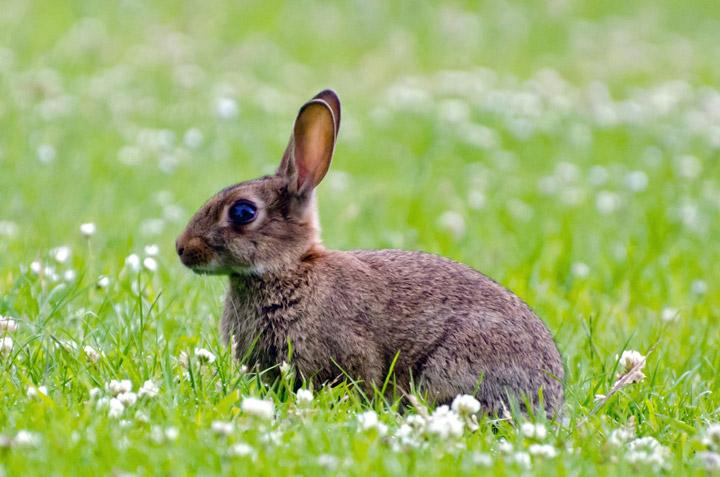 La tenuta: il paradiso dei conigli