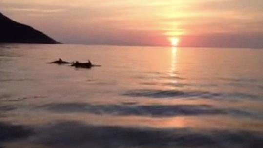 Delfini all'Isola d'Elba